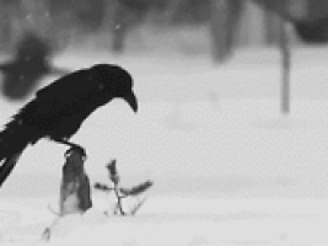 """""""Fly Low Ye Carrion Crow"""" - Two Gallants (2007)"""