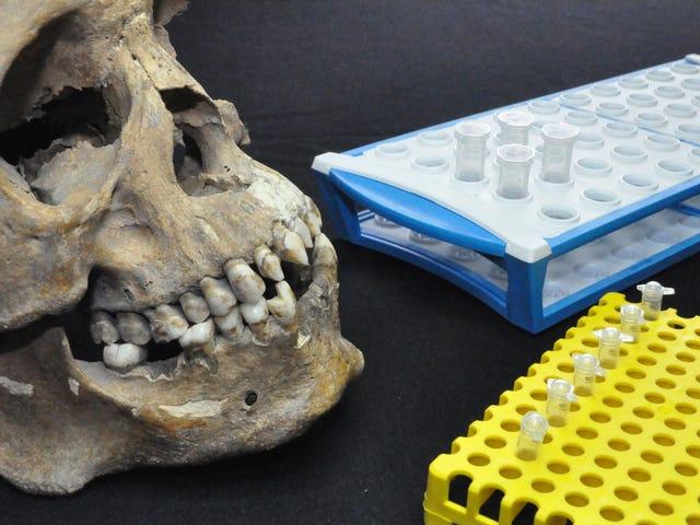 Tre afrikanske skeletter fundet i Mexico viser rædsel for tidligt slaveri i den nye verden