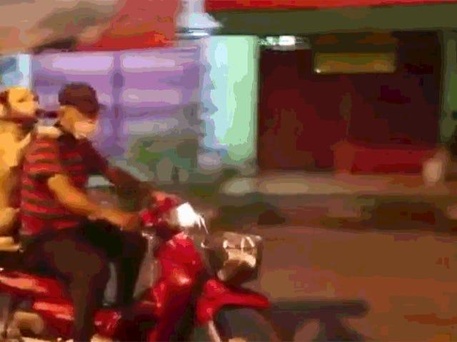 男の犬は彼の傘を持って彼のスクーターの後ろに乗る
