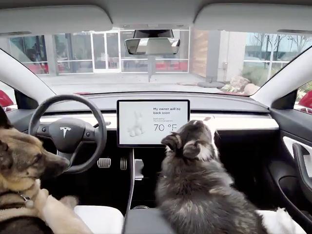 Los Tesla ahora tienen un Modo Perro que controla el climatizador cuando dejamos el perro dentro del coche