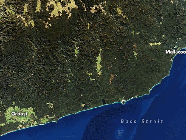 从太空中看到的澳大利亚可怕的野火烟雾