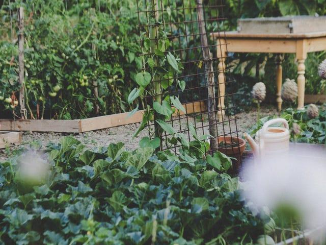 Das einfachste Gemüse für Anfänger