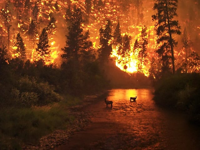 Humans Cause Most of America's Wildfires