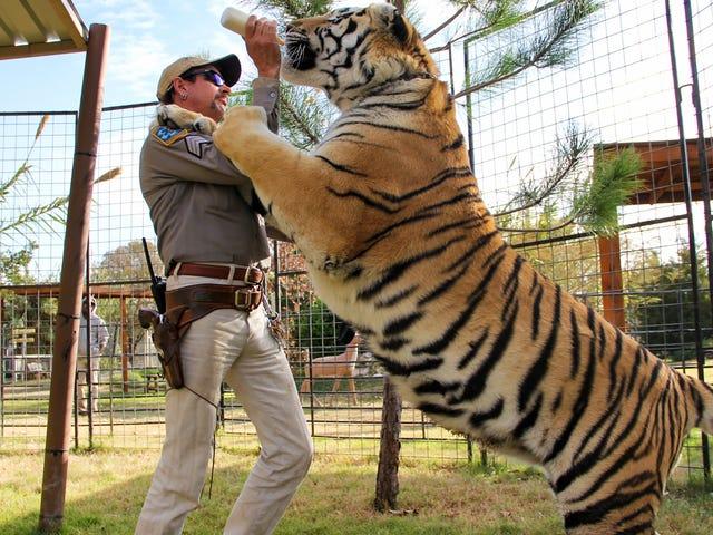 Tiger King 10 günde 34 milyon izleyici kazandı, bu yüzden ondan kaçamayız