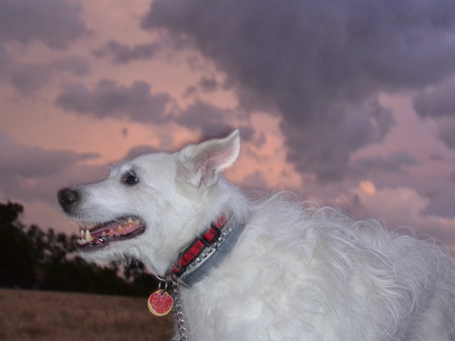 Oppo Was Light On Dog Photos Tonight So I Went Outside and Took Some...