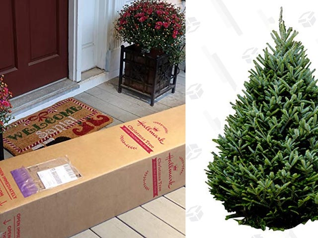 Tradition Be Damned: Amazon Wants to Ship You a Live Christmas Tree This Year