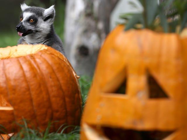 Happy Halloween da Barbara Ehrenreich