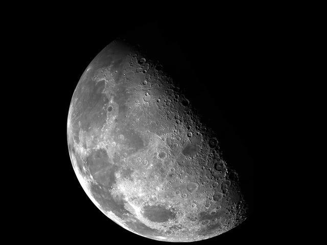 China e plantas e insetos em uma área inexplorada de Luna este ano