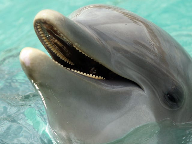 Please Pray For The Ukrainian Military Dolphins Who Are Now Dead