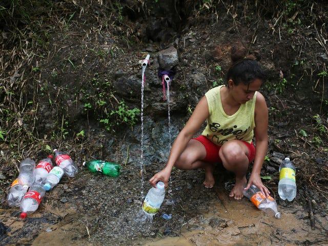 FEMA-tjänstemän säger att det inte är deras jobb att distribuera mat och vatten till orkanoffer i Puerto Rico: Rapport