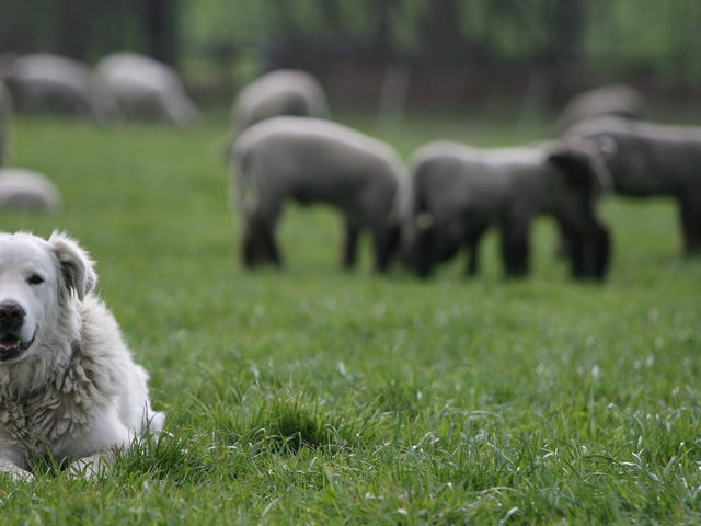 New Theory Explains Why Europe's Original Dogs Vanished
