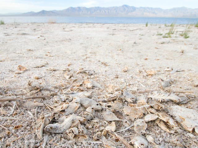 Add Screwed-Up Fish Skeletons to the List of Possible Climate Change Horrors