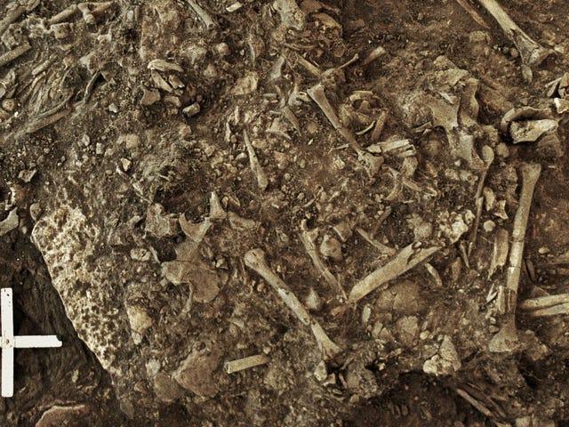 Ancient Black Plague Found in Swedish Gravesite