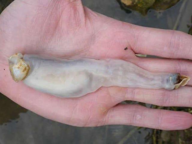 Este gusano recién descubierto devora piedra y la convierte en arena
