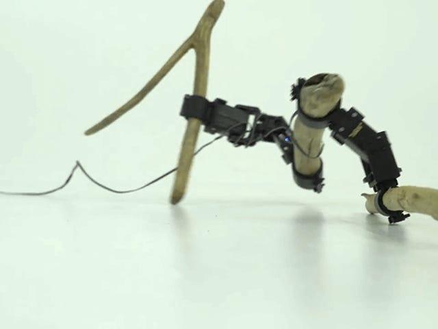 Ce robot triste fabriqué à partir de brindilles aléatoires doit apprendre à se déplacer