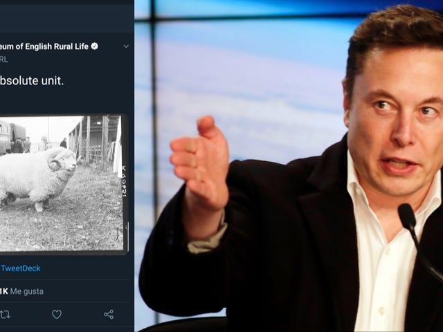 Crea un tuit viral y Elon Musk lo contrata como community manager de Tesla