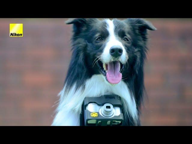 Camera getriggerd door hartslag Onthult een hondenoog van fotografie?