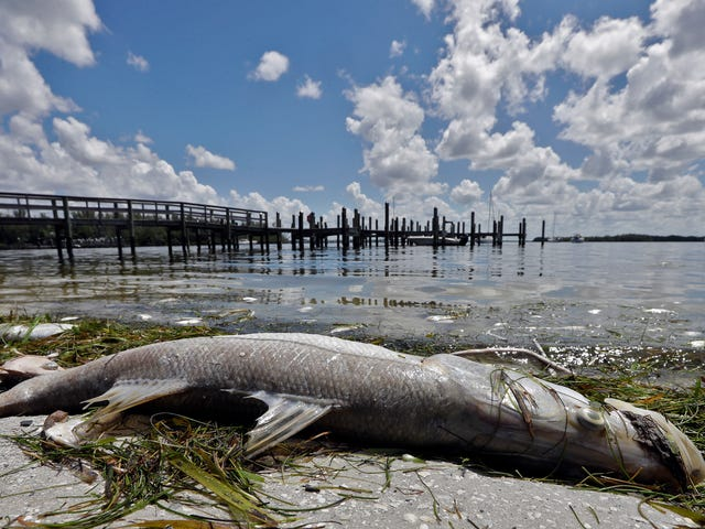 Why Is Florida's Red Tide Outbreak So Bad Right Now?