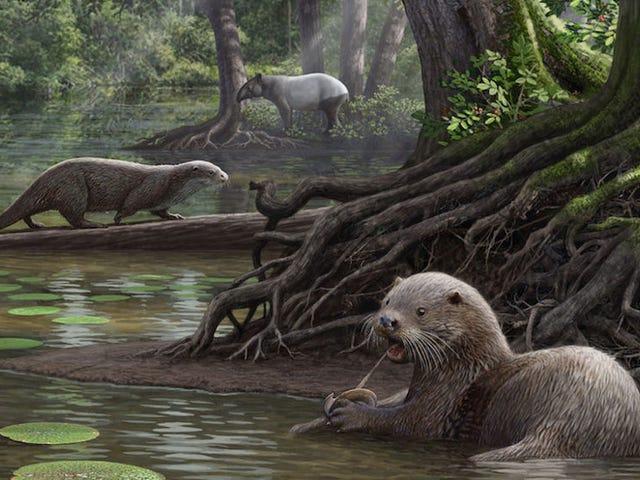 Wolf-Sized Otters Prowled World sześć milionów lat temu