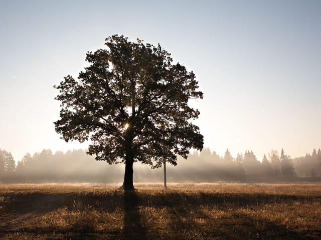 Làm cho cây 'gia đình' của riêng bạn cho cảm hứng sáng tạo