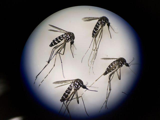 आहार औषधियां हमारे रक्त के लिए मच्छरों की प्यास को रोक सकती हैं