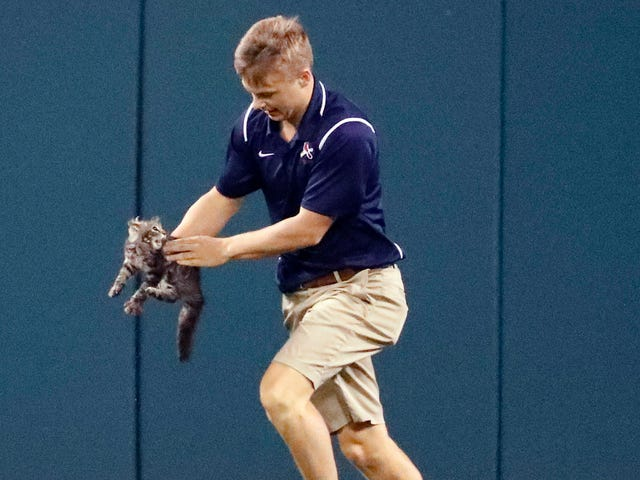 Cardinals Rudely Presume Feral Cat That Ran On Field Is Team Property