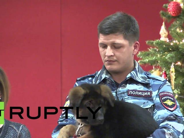 La Russie donne à la France un chiot nommé Dobrynya pour rendre hommage à Diesel le chien de police décédé