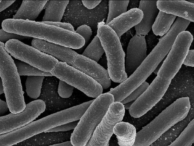 Your Diet American Crappy Boleh Meninggalkan Bakteria Gut Anda Stunted