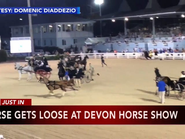 Fed-Up Horse Hops Fence, Briefly Escapes Horse Show