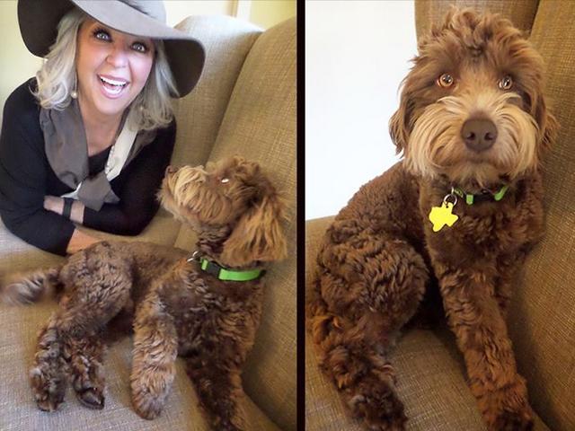 Помогите Пауле Дин назвать свою собаку, которая выглядит так же, как Сэм Эллиотт
