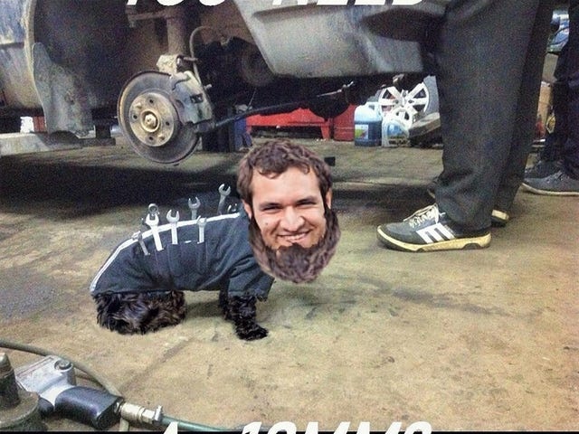 hund demuro