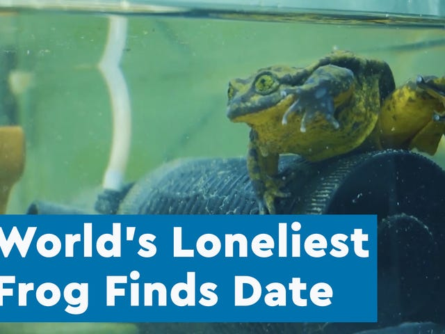 After a Decade, Scientists Have Found a Mate for the Loneliest Frog on Earth