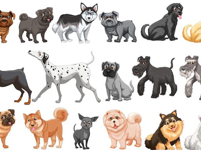 あなたの新しい犬、ビヨンセは何品種ですか?