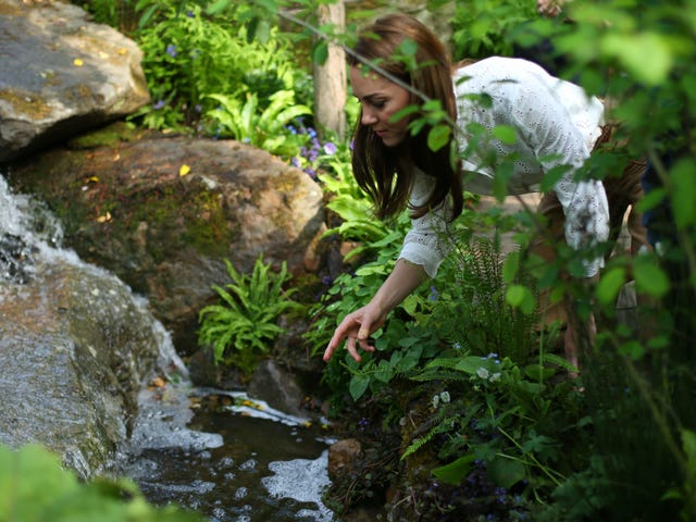 Here's Kate Middleton by a Babbling Brook