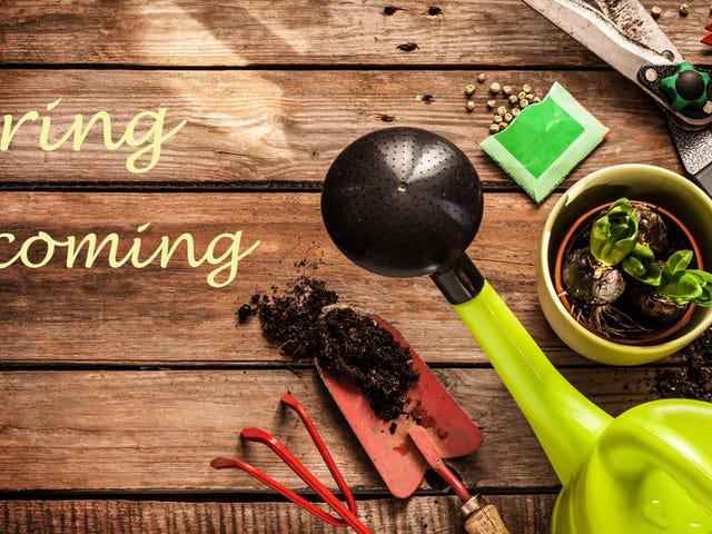 Hayalinizdeki Bahçeye Hazır Olmanın En İyi 10 Yolu