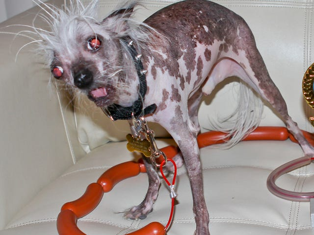 Saturday Night Social: Competition Is Fierce for This Year's 'World's Ugliest Dog' Pageant