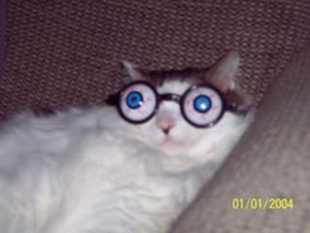 Choire Sicha has a pretty good cat Pinterest