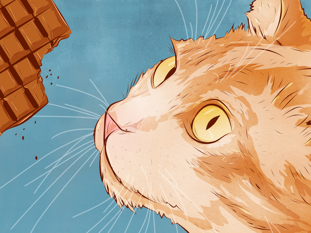 Những thứ nguy hiểm nhất đối với mèo khi ăn, và tại sao