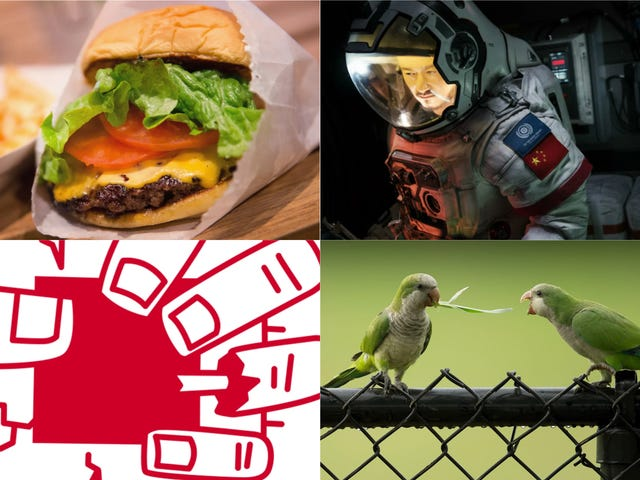 Hidden Netflix Gems, Feral Parrots, and Intel Chip Flaws: Best Gizmodo Stories of the Week