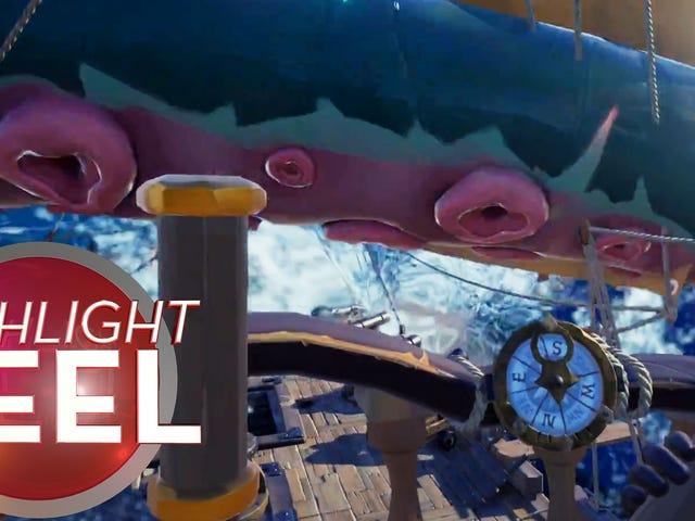 大鲨鱼被大鱿鱼击中