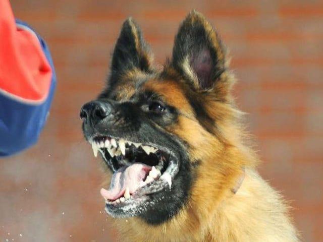 Una naturópata trata el mal comportamiento de un niño de cuatro años con una dosis de saliva de perro rabioso
