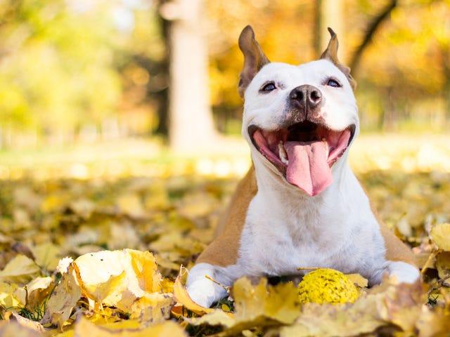 Bu Garip Kamera, Evcil Hayvanınızı Mutlu Eden Ne Parçalar