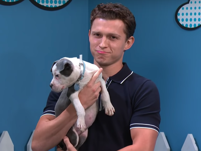 Tom Holland's Making It Really Hard to Honor My Apartment's 'No Dogs' Policy