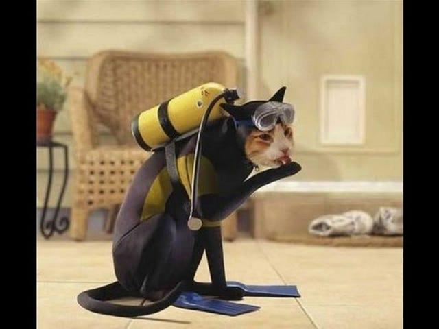 Caturday!  Tema `` `` Gatos de Halloween '' `` ~