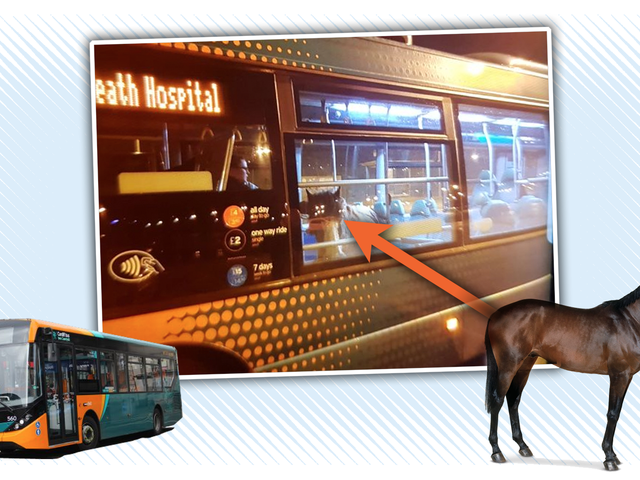 Bus à cheval