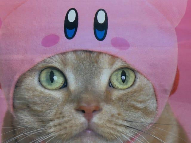 Kirby Hats Kirbify Your Cats