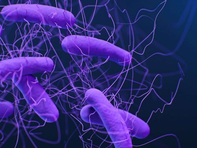 CDC关于Superbug的新报告充满了坏消息