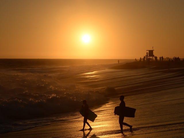 Les eaux californiennes s'acidifient deux fois plus vite que le reste des océans