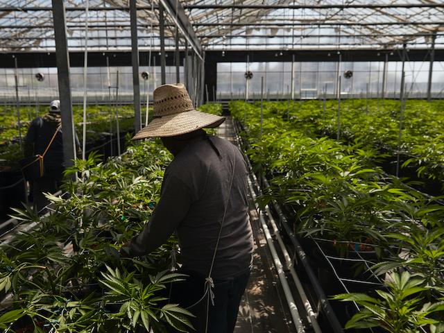 San Francisco vill använda algoritmer för att rensa tusentals marijuana-övertygelser från rekordet