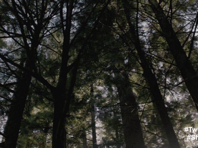 ギルモアトレイル - ツインピークス( 'Falling'と 'Laura Palmer's Theme'のカバー)